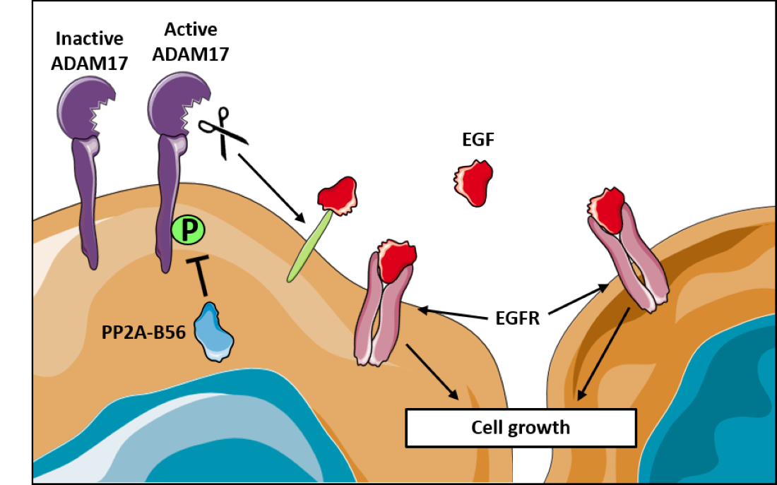 Researchers' illustration of the results