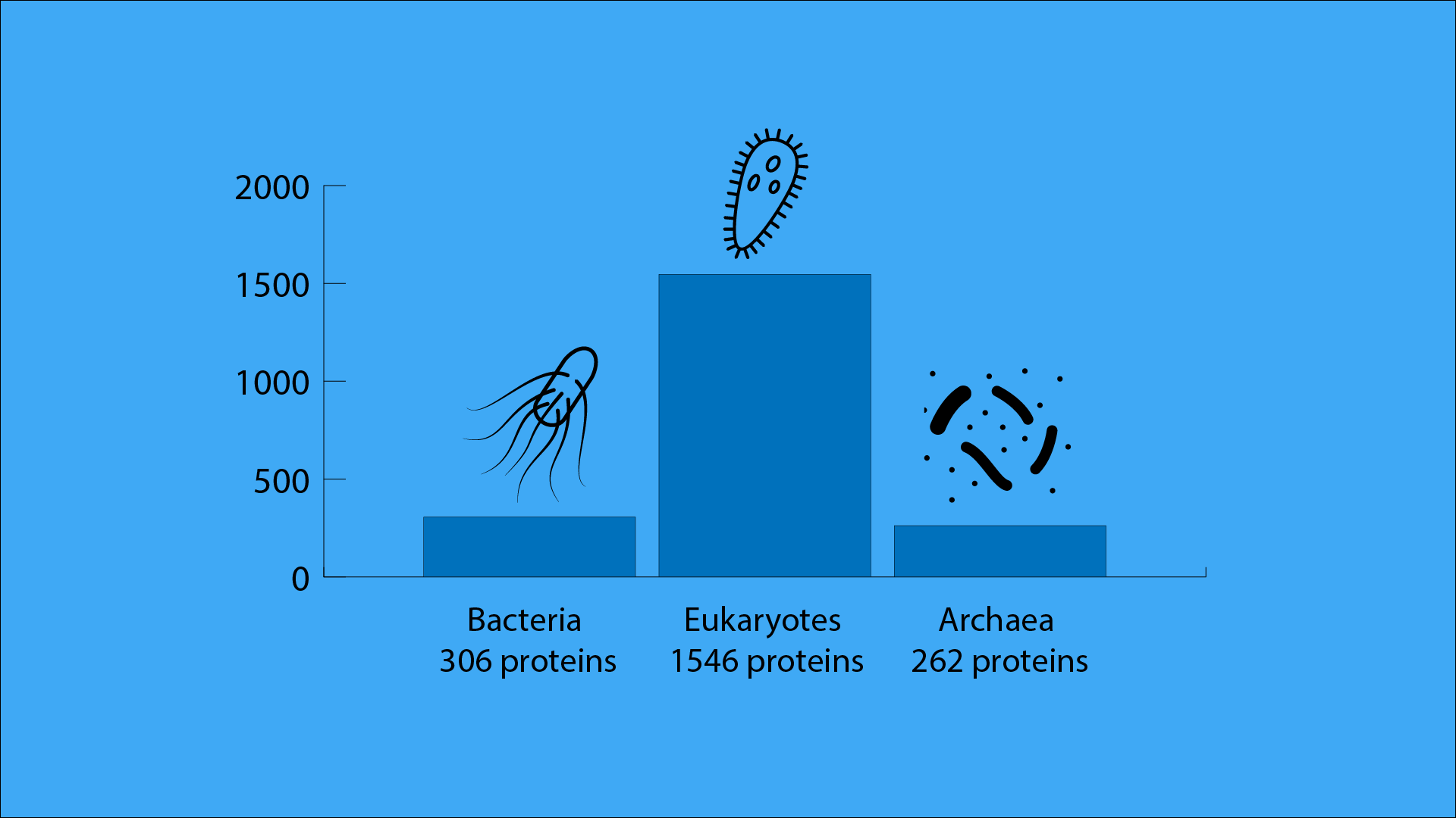 For Bacteria 306 proteins, for eukaryotes 1546 proteins and for archaea 262 proteins contribute to 90 percent of the total protein amount